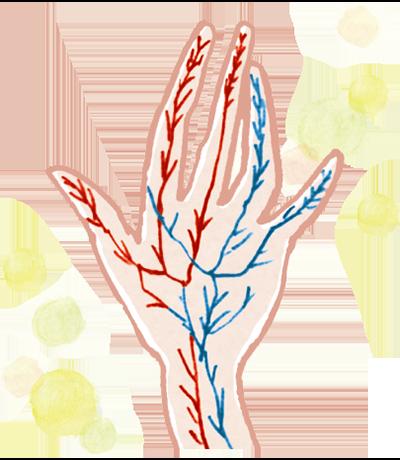 毛細血管イメージ