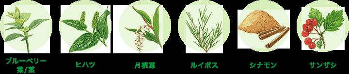 Tie2(タイツー)を活発にする成分を持つ植物
