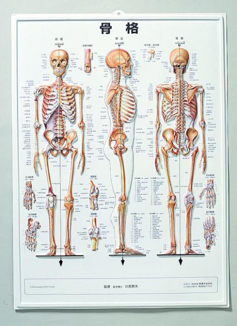 3D人体チャート(骨格)