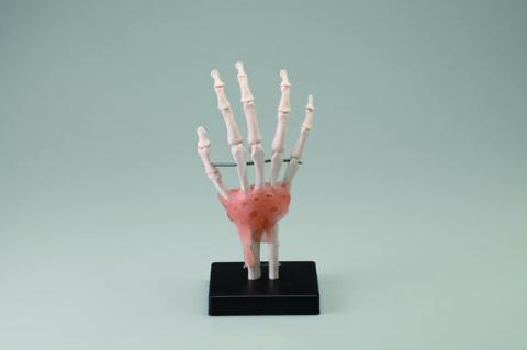 手関節模型