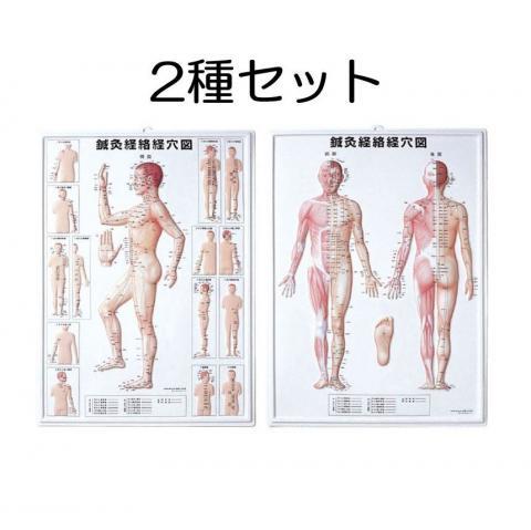 3D鍼灸経路経穴図(2種セット)